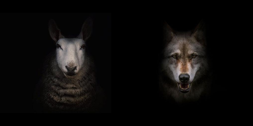 wolf lamb