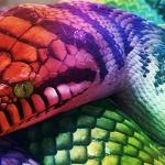 Rainbow Serpent Walkers