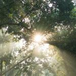Nourish, Nurture in Nature, Renew - Kundalini Yoga Retreat